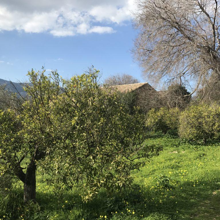 Palermo Favorita