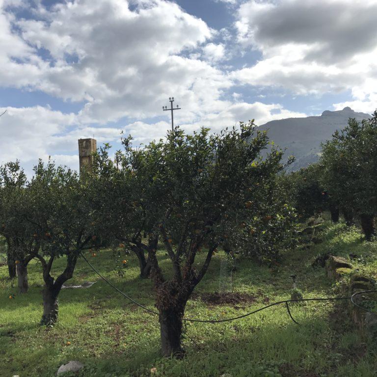 Ciaculli (Palermo)